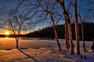 branches-cold-conifers-259620