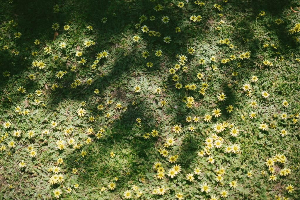 photo-of-flowers-and-grass-3060930